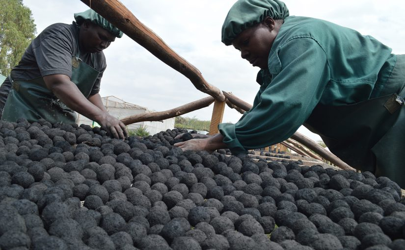 Charcoal briquettes manufactured from human waste in East Africa