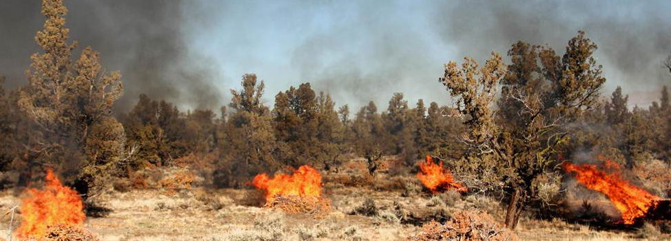 Wildfires burning brush and trees