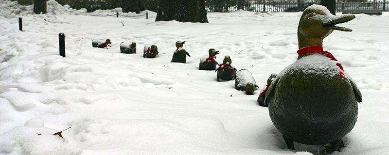 Boston duck statues in the snow