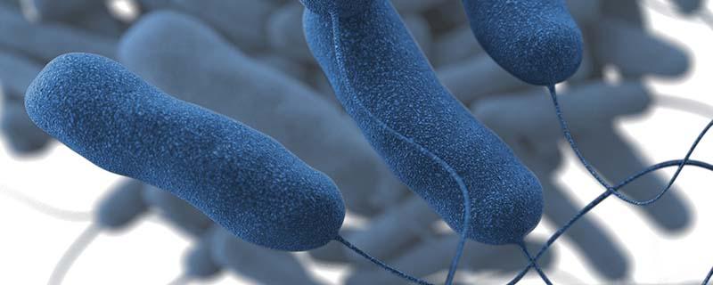 Medical illustration of Legionella pneumophila