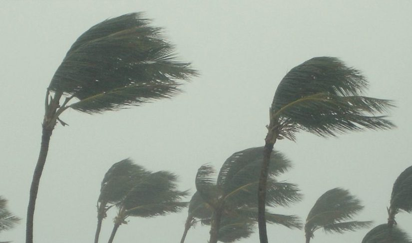 Palm trees bending in strong winds.
