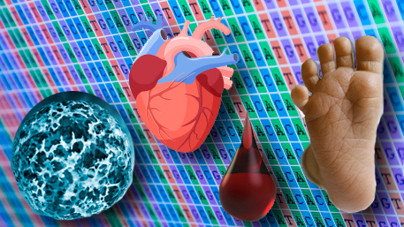 s cancer cell, a heart, a drop of blood and a babies foot in front of sequencing