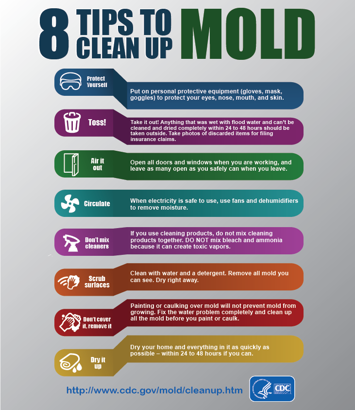 8 Tips to Clean Up Mold