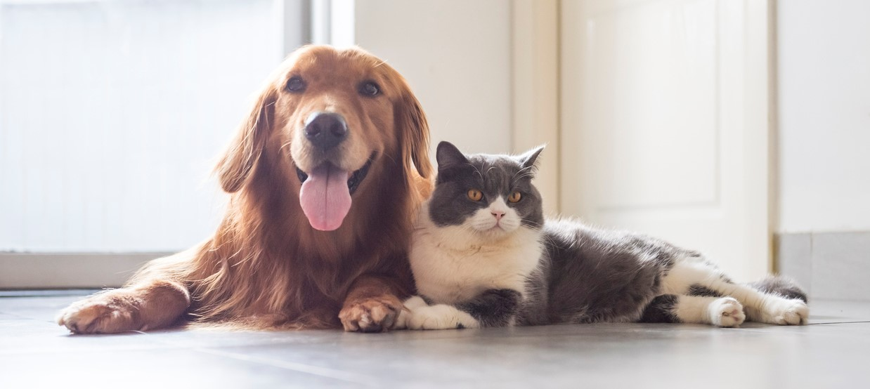 What You Need to Know About Pets & COVID-19   Blogs   CDC
