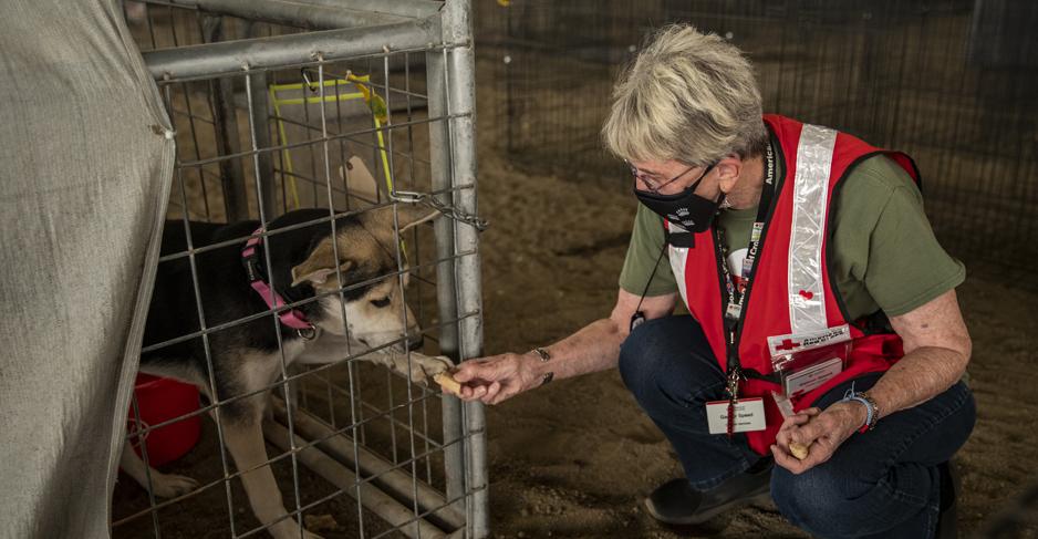 A woman in a mask shakes the paw of a dog in a cage.